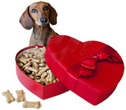 Pet Supplies and Pet Products  Brisbane
