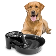 Why do pets need a water fountain?