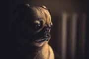 Avail Online Pet Supplies Australia