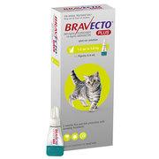 Bravecto Plus - Multi-Spectrum Spot-On Treatment for Cats